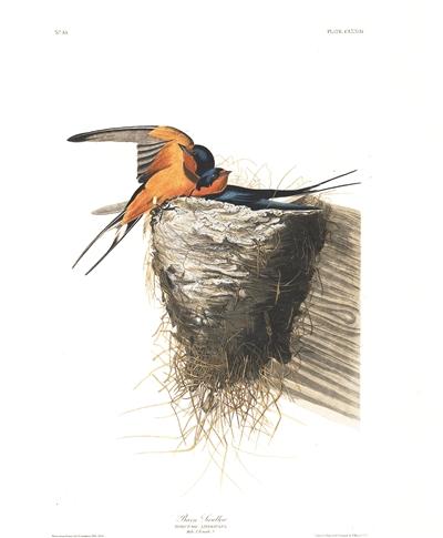 《丛中鸟》 休闲伦理与观鸟精神